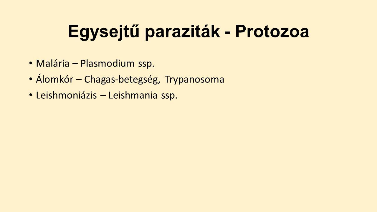 előadás a parazita kezelésről