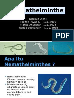 az enterobiosis patogenezise