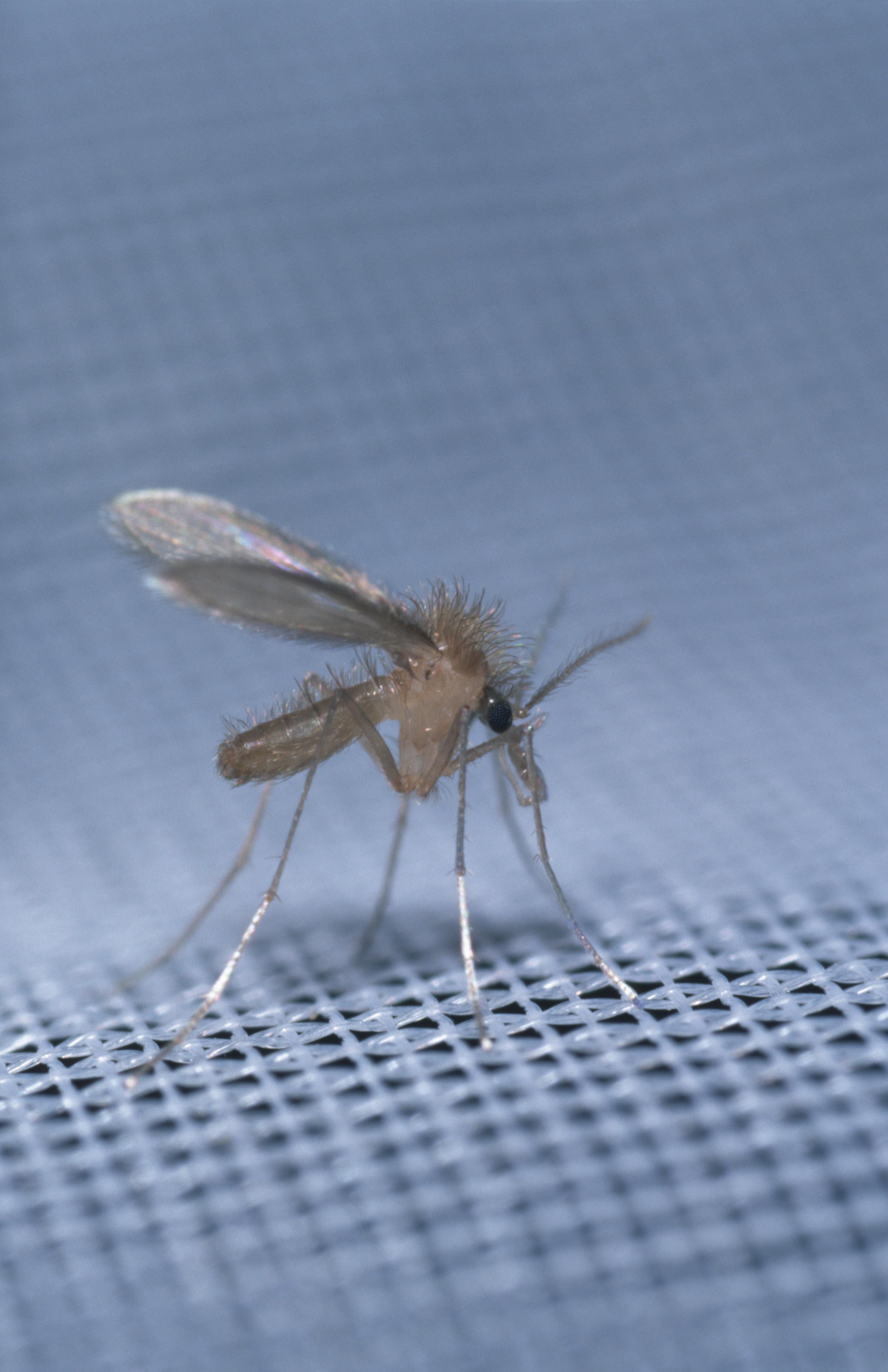 Szúnyogok, kullancsok (paraziták) – nem csak számunkra idegesítőek.