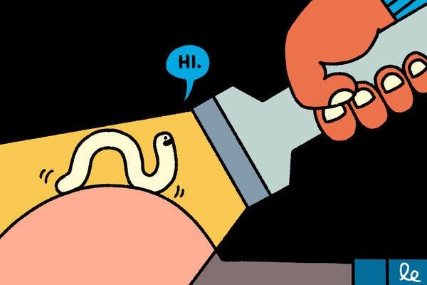 Helminthigiénés hipotézis, Bélféreg, Bélférgesség - Betegségek | Budai Egészségközpont