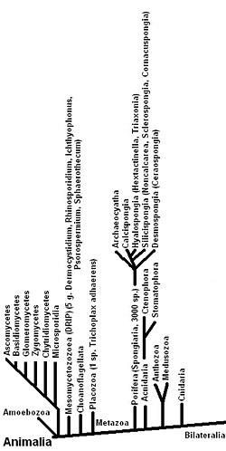 állatok állati eredetű platyhelminthes példái