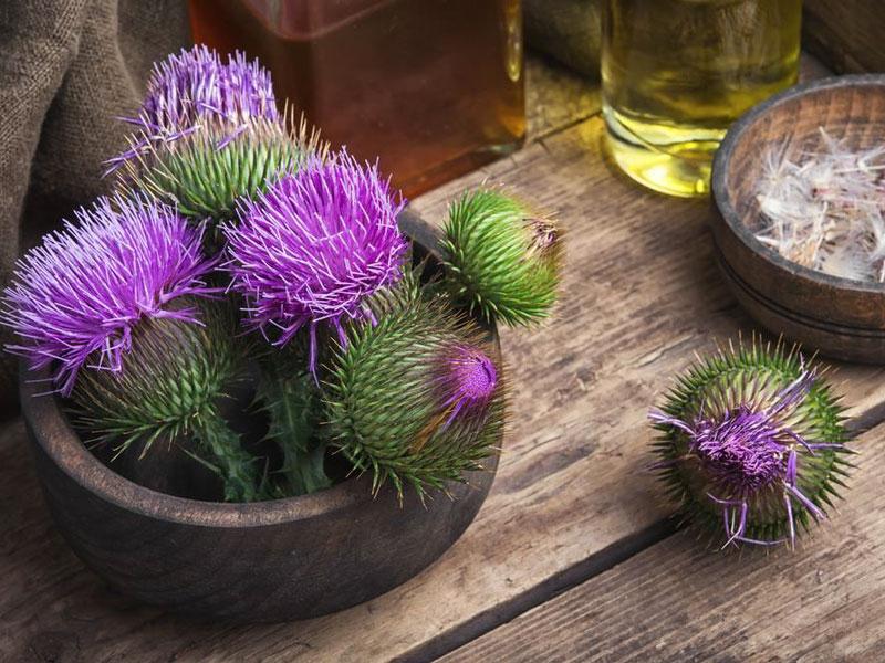 Méregtelenítés gyógynövényekkel | Gyógyszer Nélkül