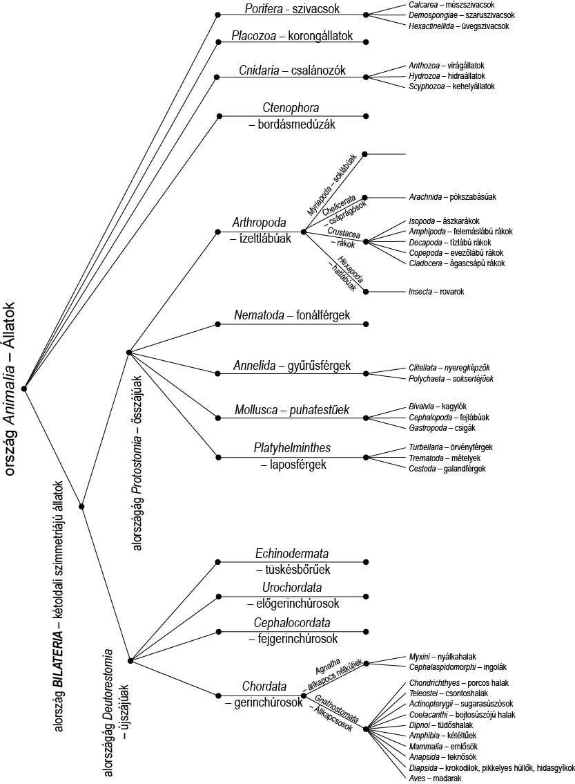 Állatrendszertan (BIB 1208) gyakorlat