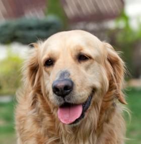 Féreghajtó tablettát csak állatorvosnál tudok beszerezni?