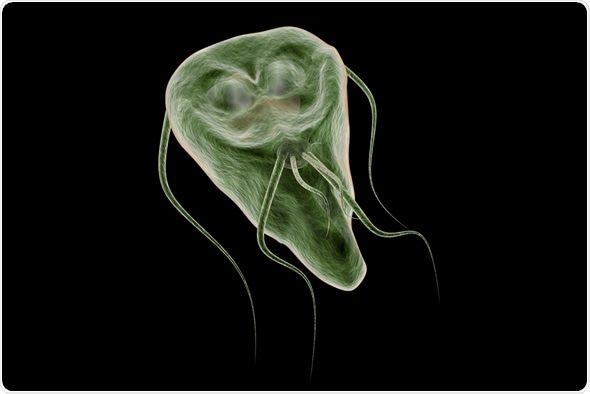 Giardia parasite how long does it last