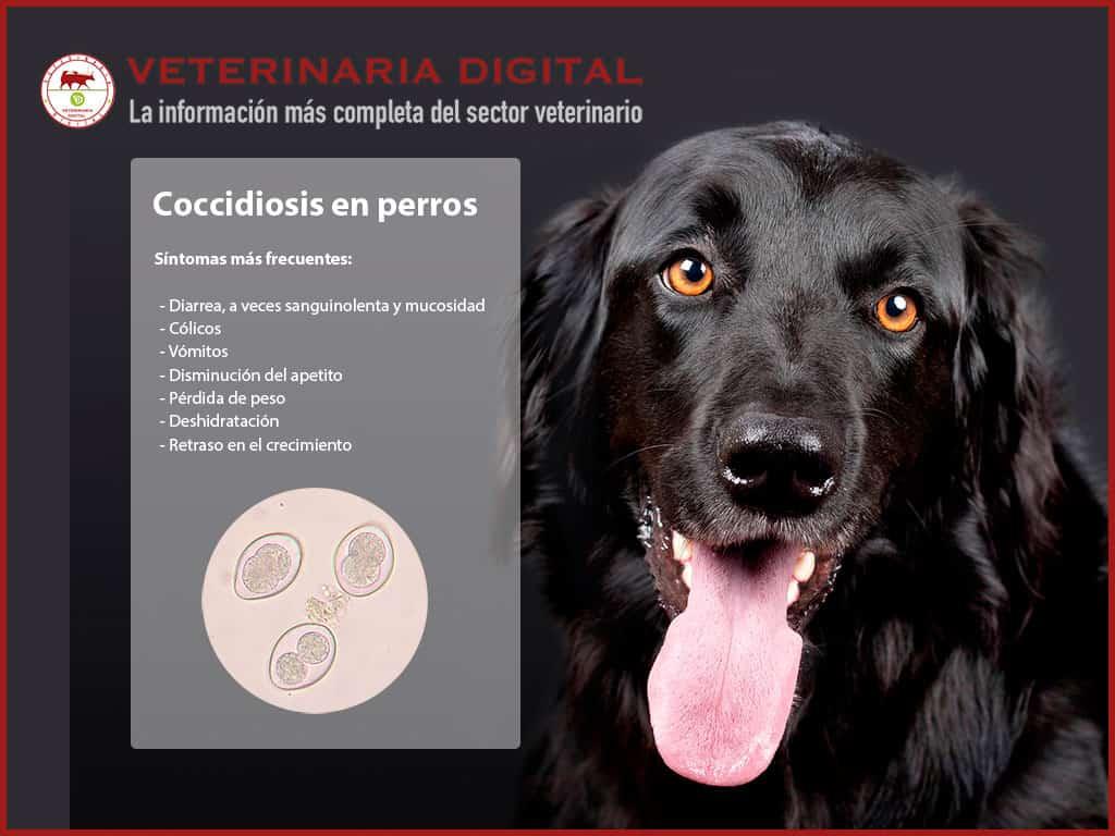 giardia y coccidia en perros