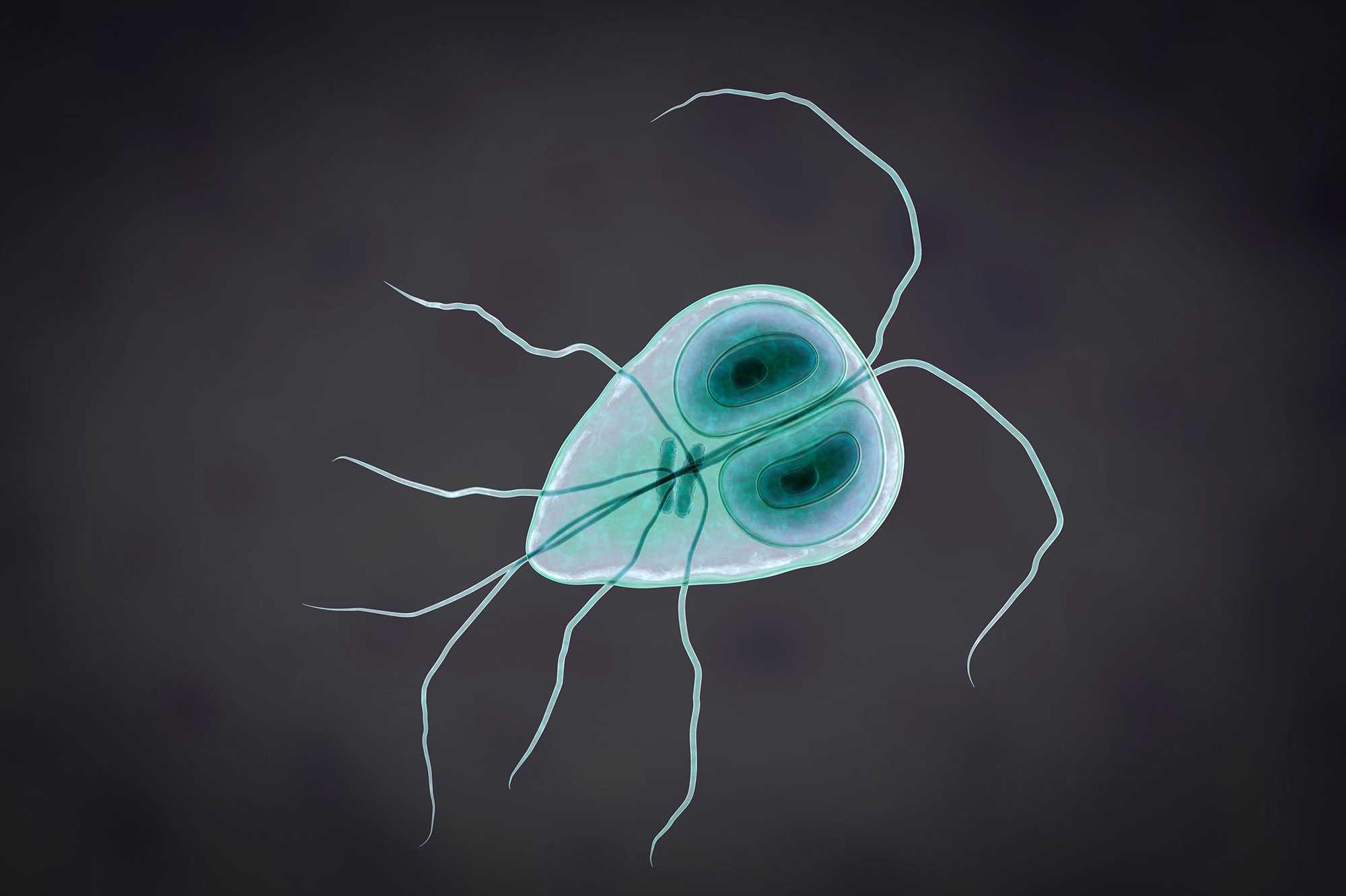 dpdx paraziták és egészség az ascaris fertőzés megelőzésének fő intézkedése