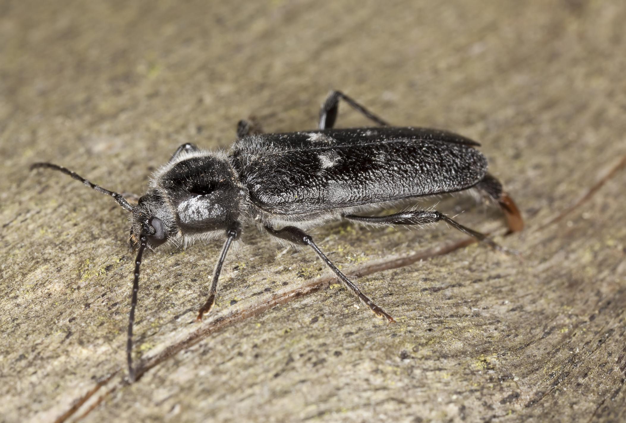 házi paraziták rovarok fotója és neve