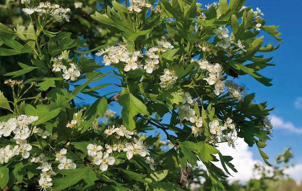 segít az enterobiosis iskolában virágkertészet pasziánsz