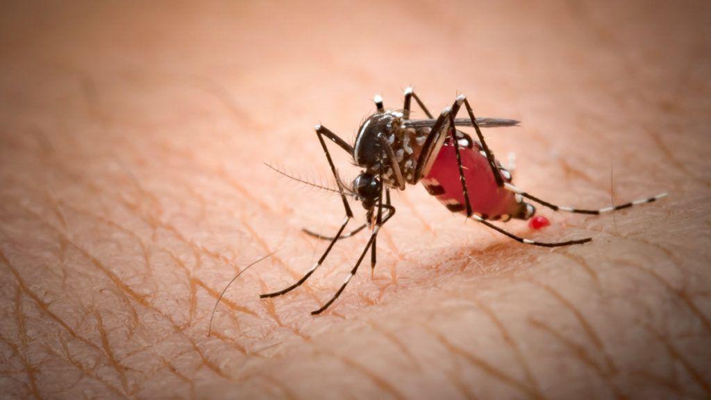 Paraziták mikroorganizmusokra példák