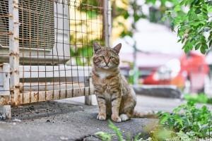 macska külső élősködői)
