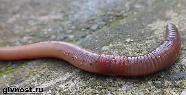 max méregtelenítő étrendkiegészítő kezelés kerek helminták pinworm