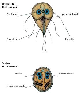 Hogyan lehet gyógyítani a parazitákat a rigóból - zagyvabanda.hu