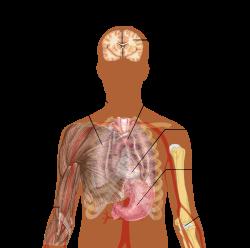 parazita emberi bőr kezelés alatt