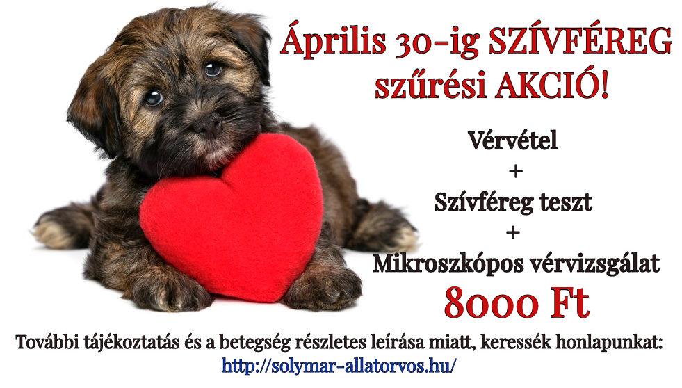 A szívférgesség előfordulása kutyákban Magyarországon - Felelős Állattartás