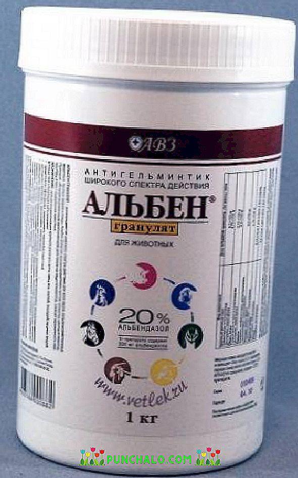 Népi gyógyszer szalagféreghez - Széles spektrumú helmint készítmények emberek számára