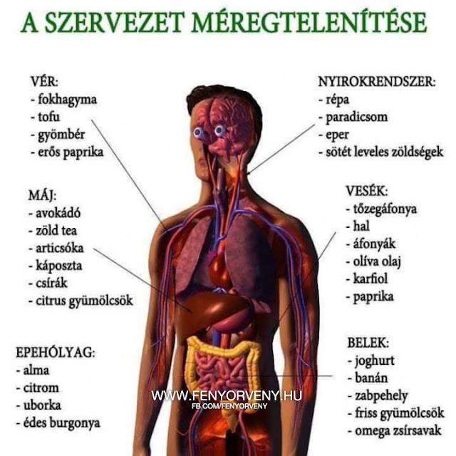 javítja az anyagcserét az emberi test gyógyszereiben