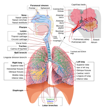 tüdő alveococcosis röntgen