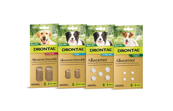 using drontal plus for giardia