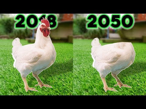 Van- e bika szalagféreg és csirke, Csirke zene (Geco Remix) az ember körféreg általános jellemzői