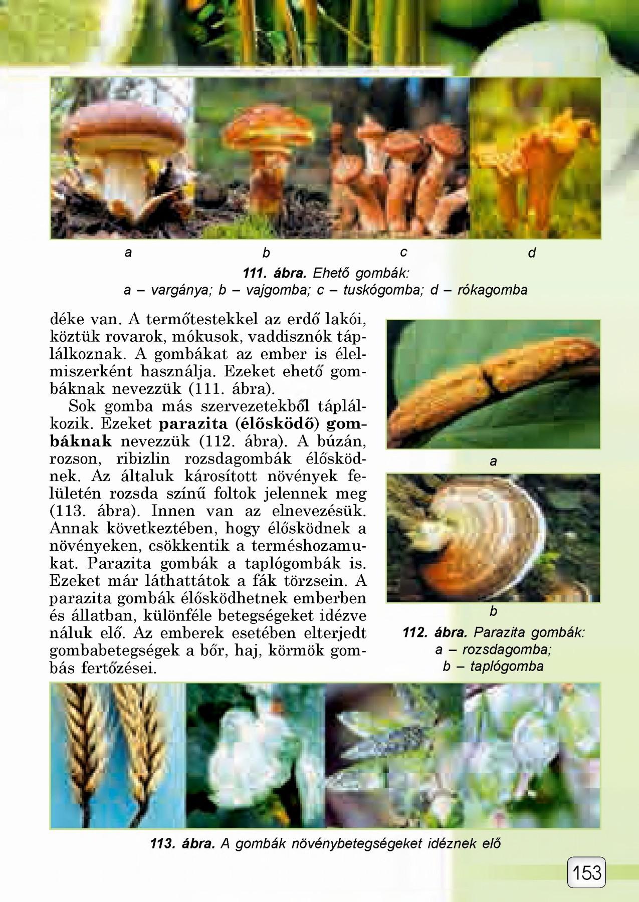 három gomba parazita)