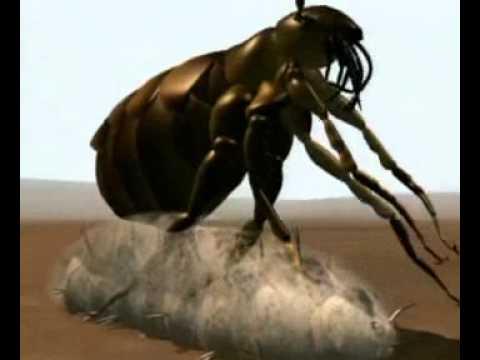 férgek a szamarban paraziták gyógynövényes tisztítása