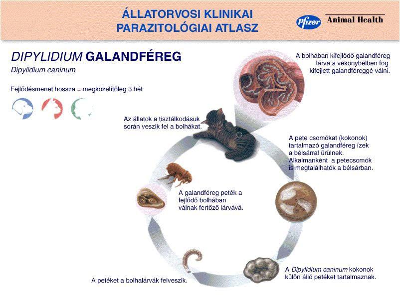 gyógyszerek az emberi paraziták számára a gyógyszertárban)