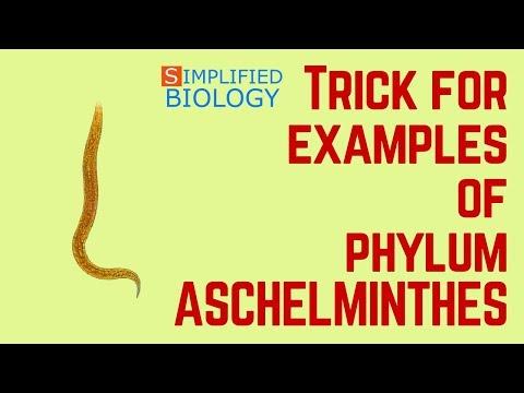 Pinworm laboratóriumi diagnosztika