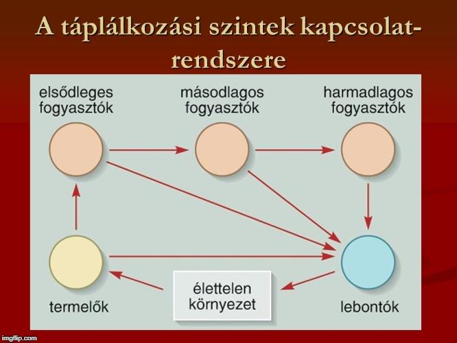 parazita kapcsolat
