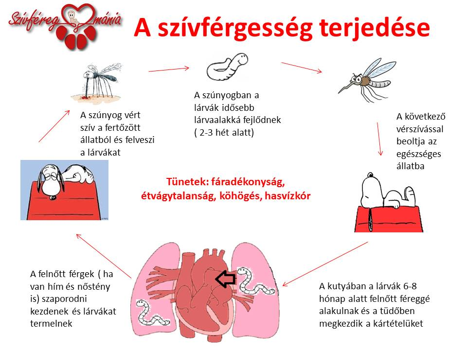 férgek és tüneteik)