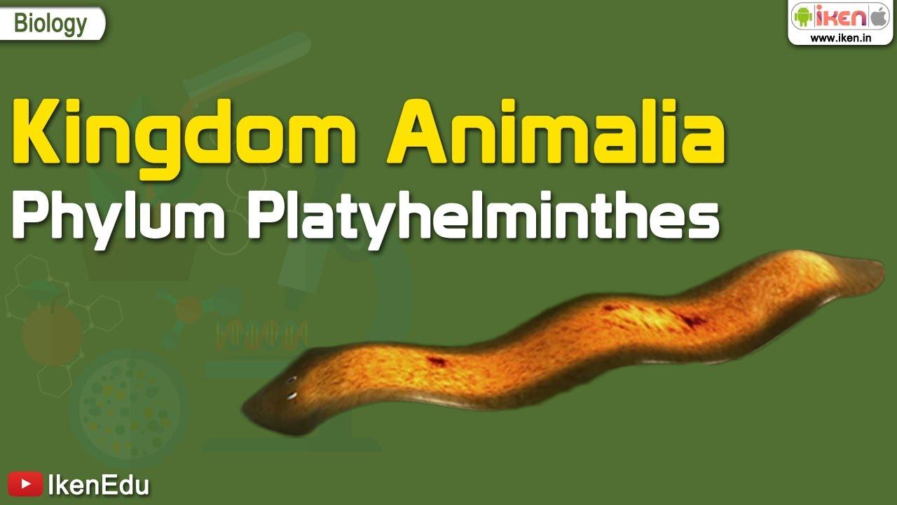 ppt phylum platyhelminthes fonálférgek)