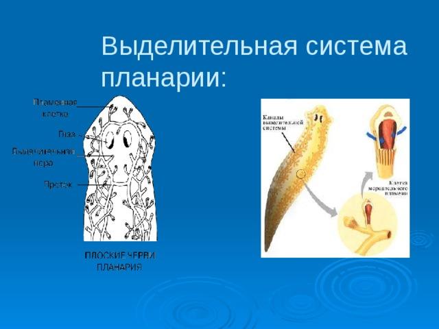 a kócos gomba parazita