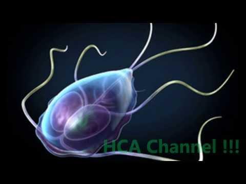 Giardia resistente tratamiento - Széklet a helminth tojásokhoz, hogyan kell adományozni
