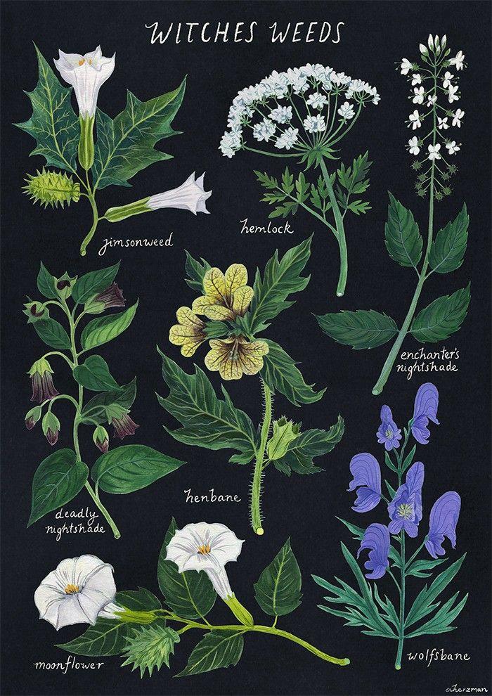 gyógynövények datura a parazitákból)