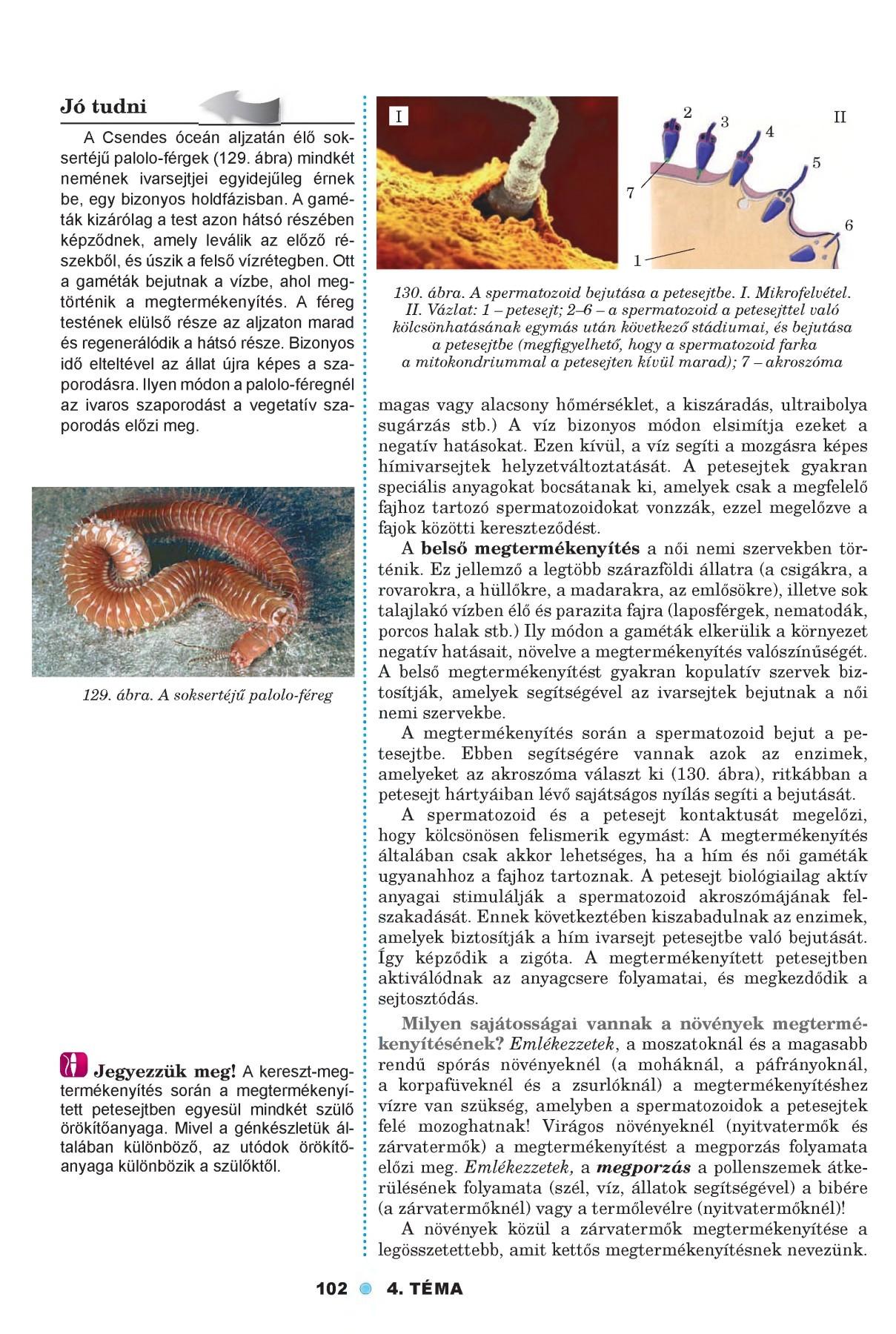parazita az almafán)