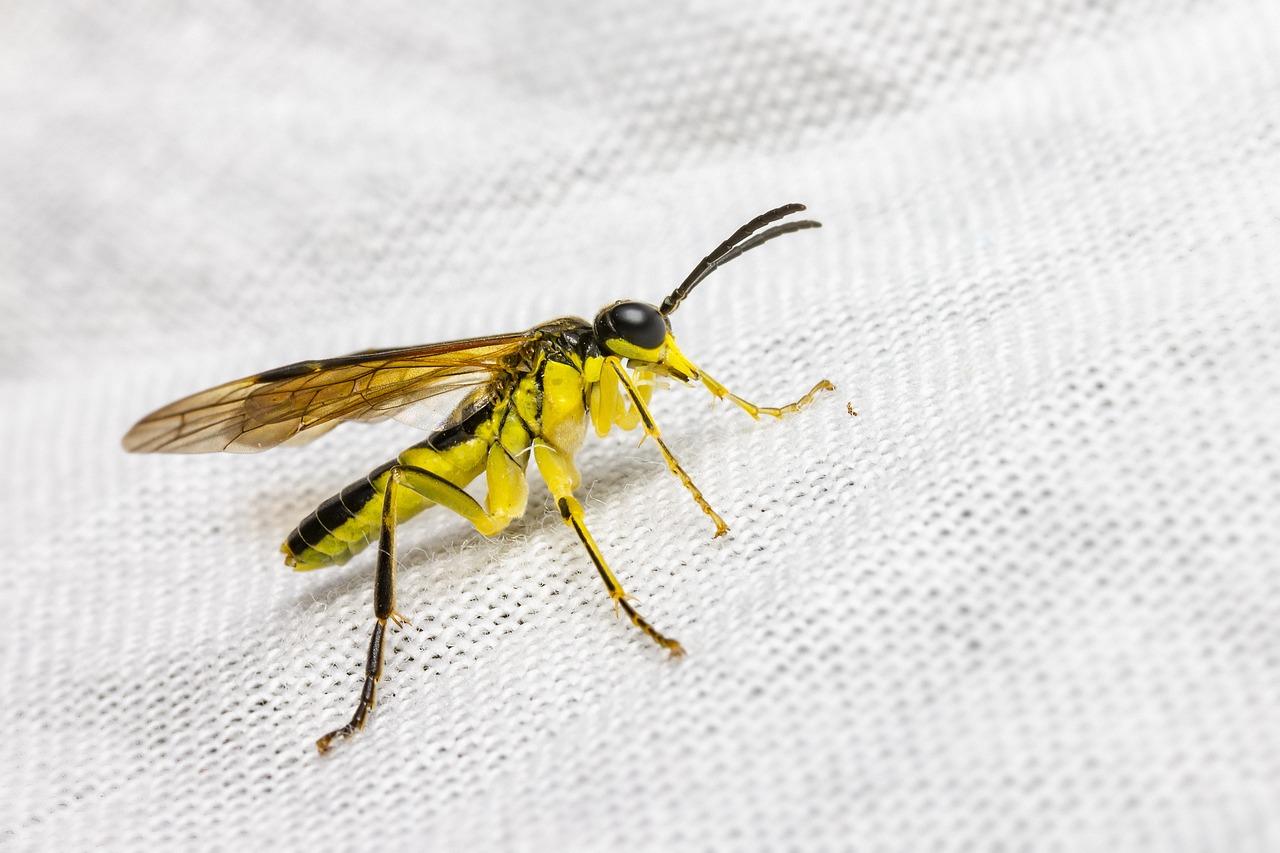 fű parazita sárga fénykép)