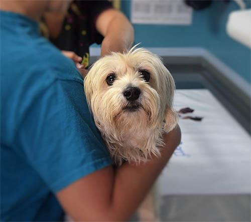 Giardia bij honden behandelen, Giardia hond forum, Versenyek-RALLY