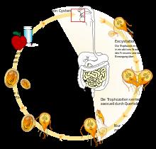 Giardien mensch symptome