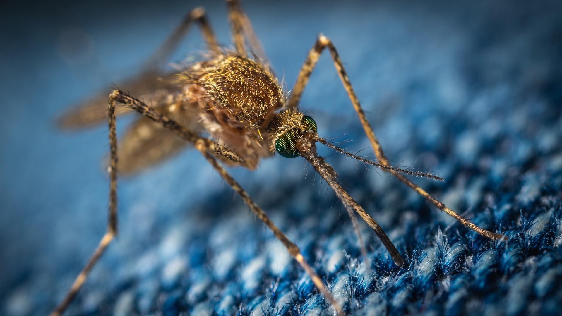 kordicepsz gomba parazita a pók