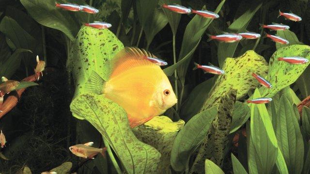mit kell tenni a halakkal)