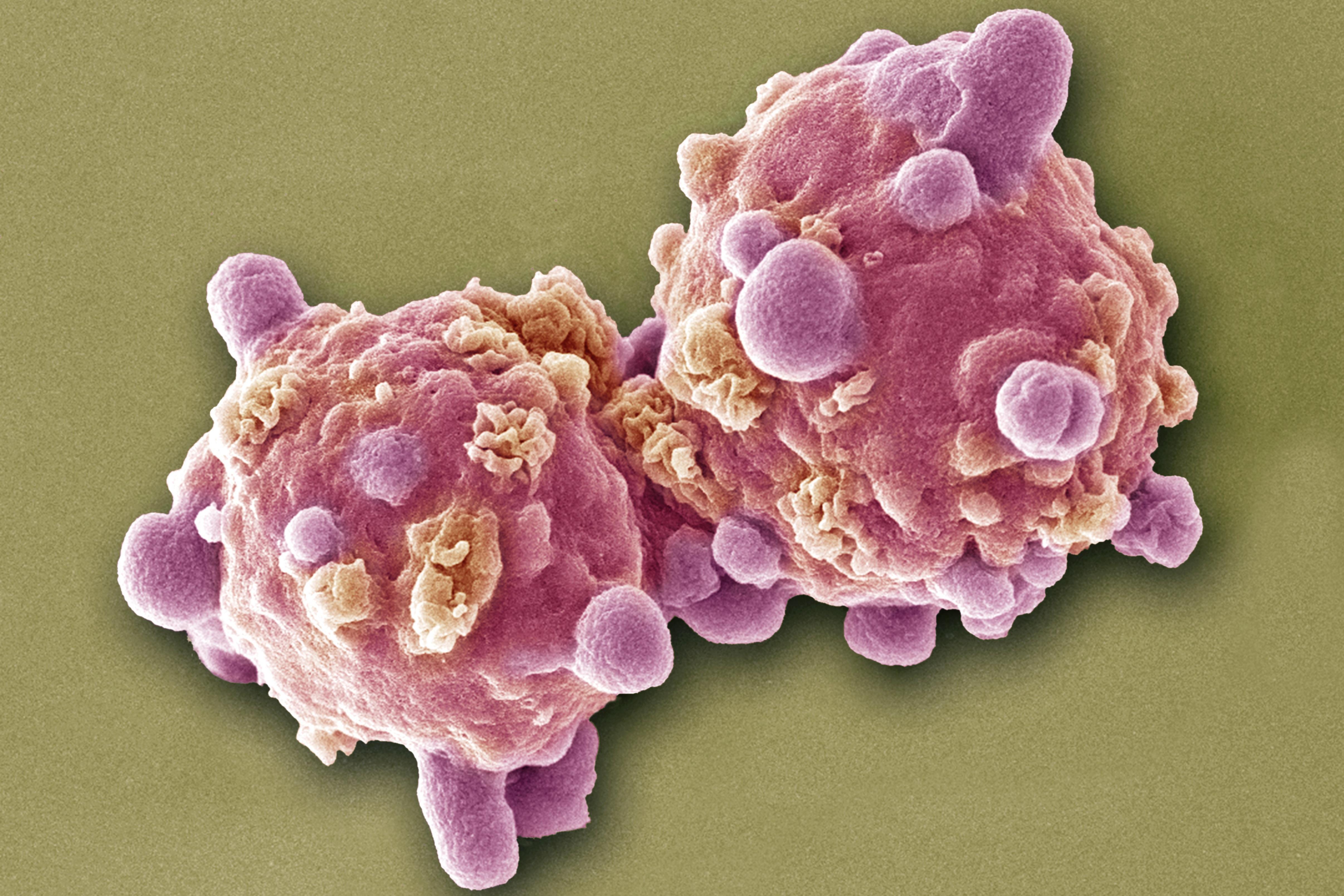 paraziták gyógyszeres kezelés