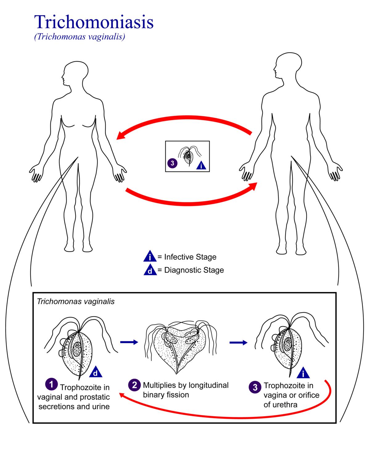 ostorféreg betegség tricho
