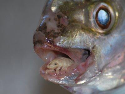 Egészség - Kerti tó - Vital Pet