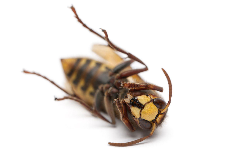 rovar paraziták társítva)