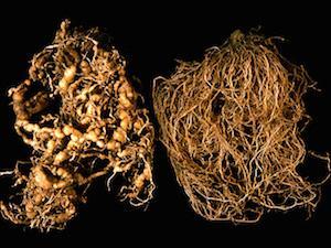 fonálféreg elleni szerek