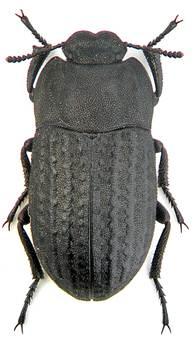 A kártevõ talajlakó rovarok, és a védekezés lehetõségei