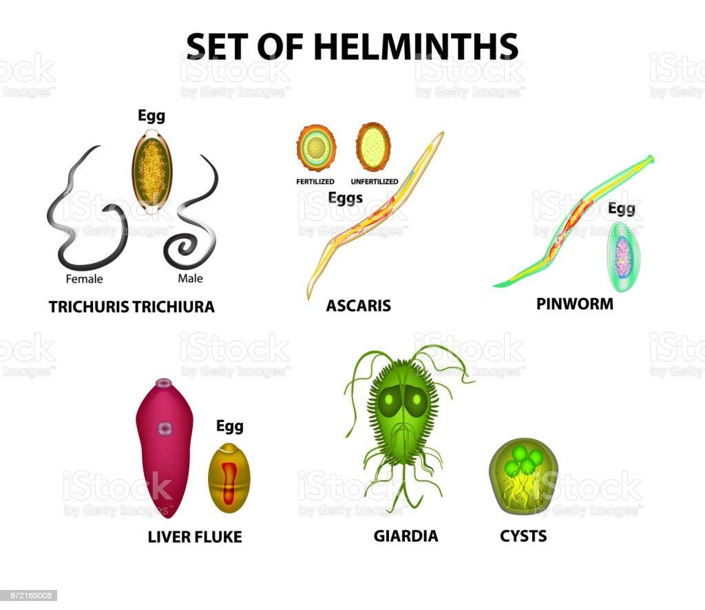 pinworm helminths gyógyszer)