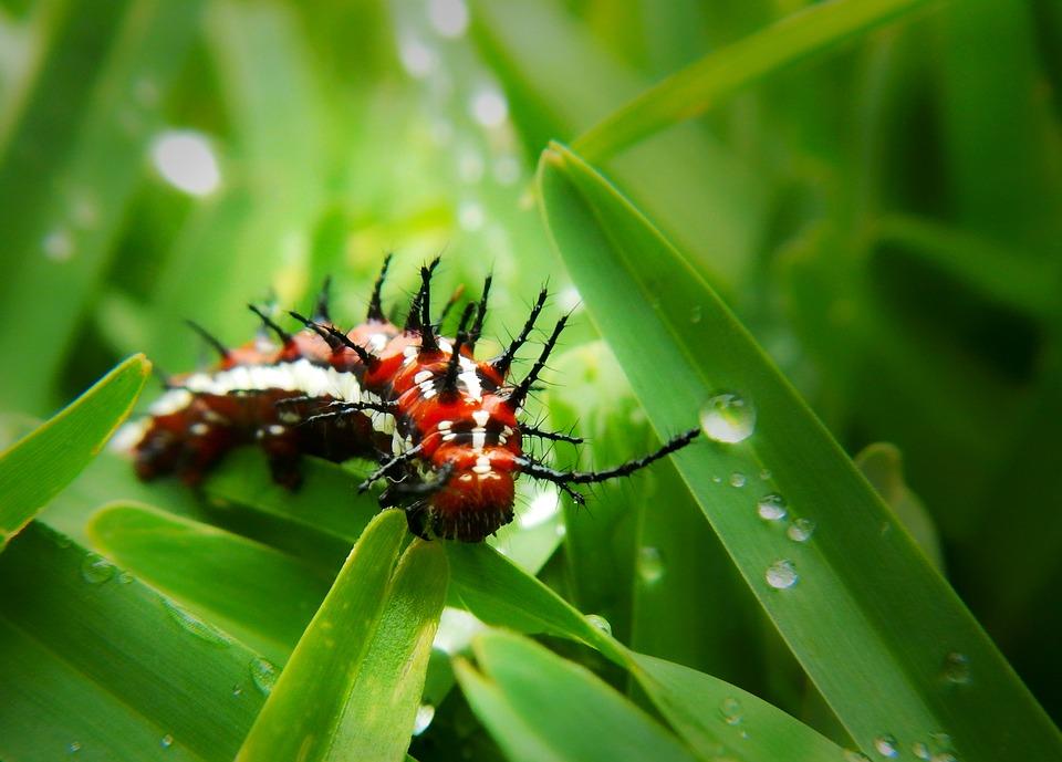 A Rospotrebnadzor megtudja a kenet eredményeit l parazita férgek kezelése