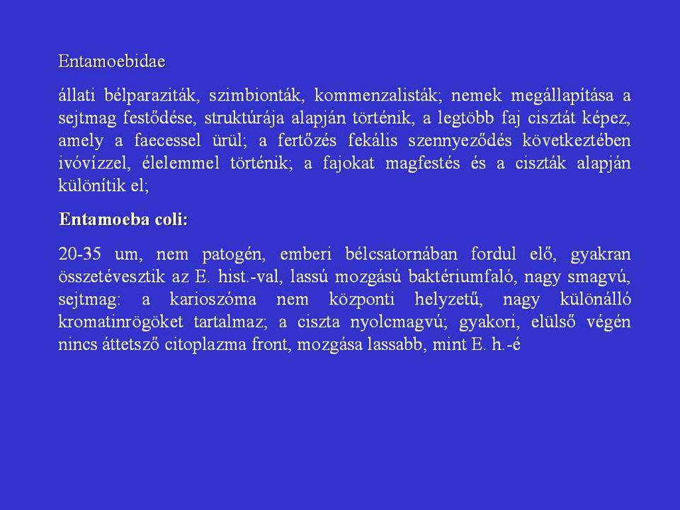 humán fascioliasis fertőzési utak)