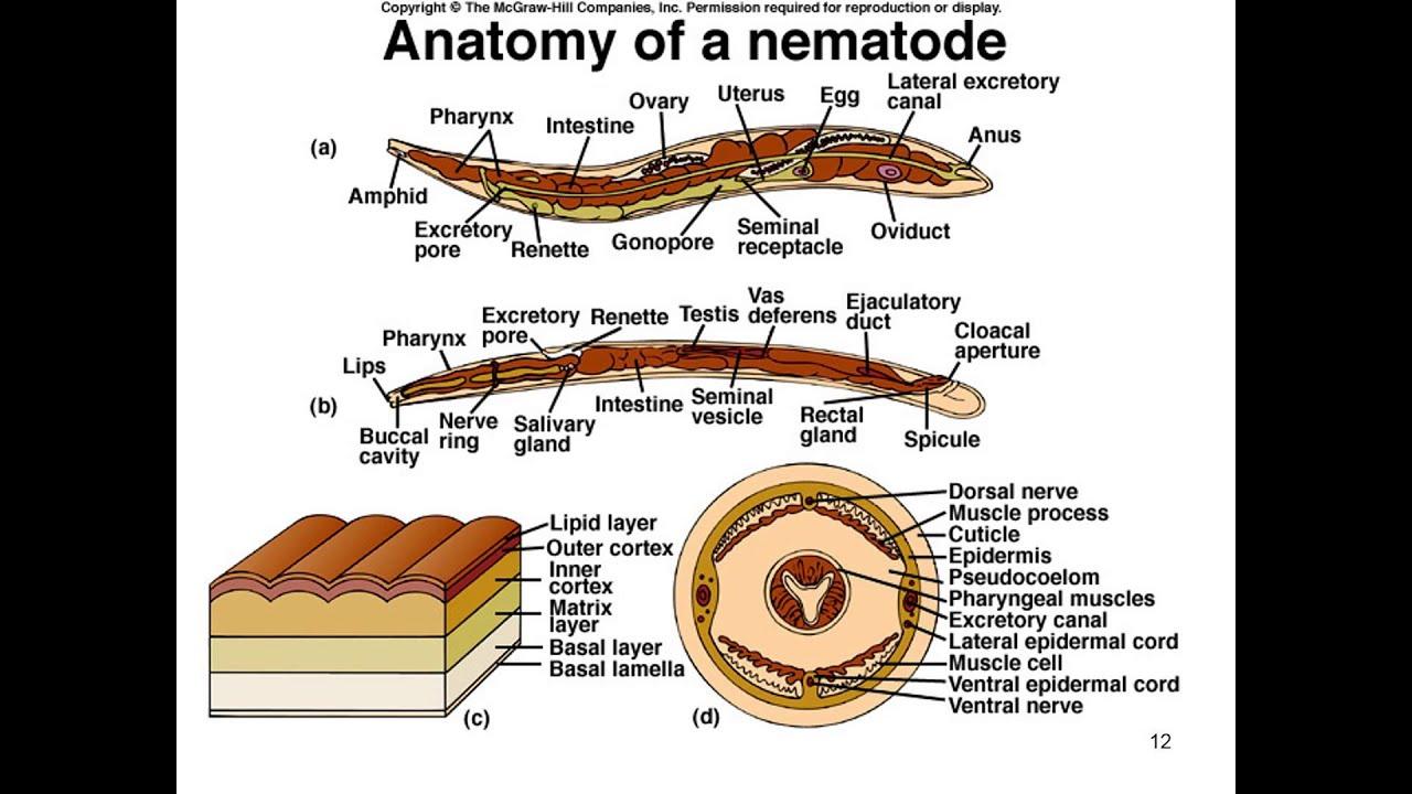 parazita jelei a testben, mint hogy kezeljék
